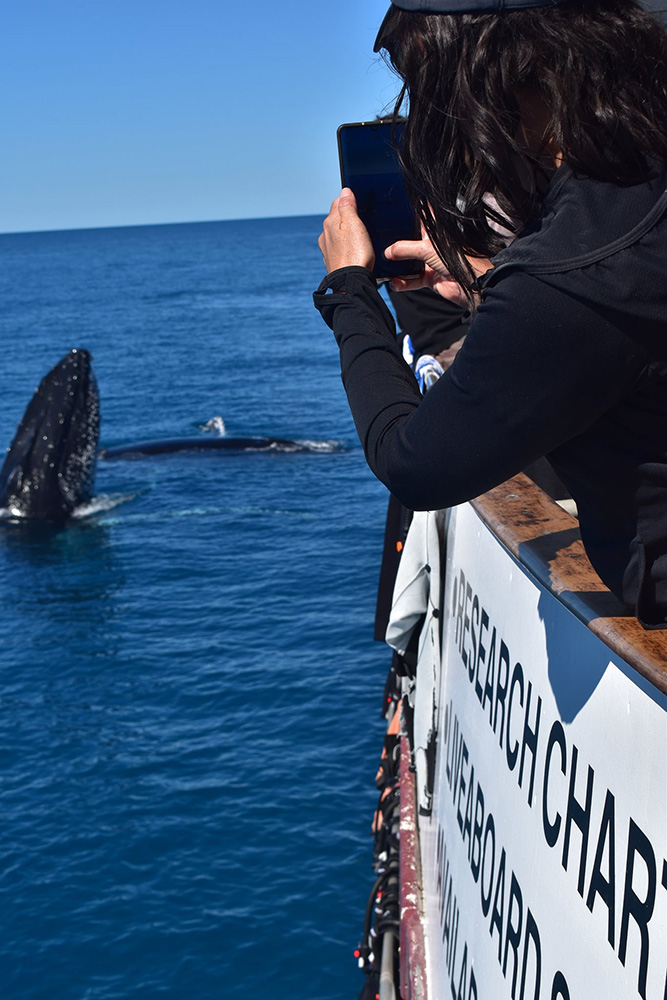 Townsville Whale Watching Tours